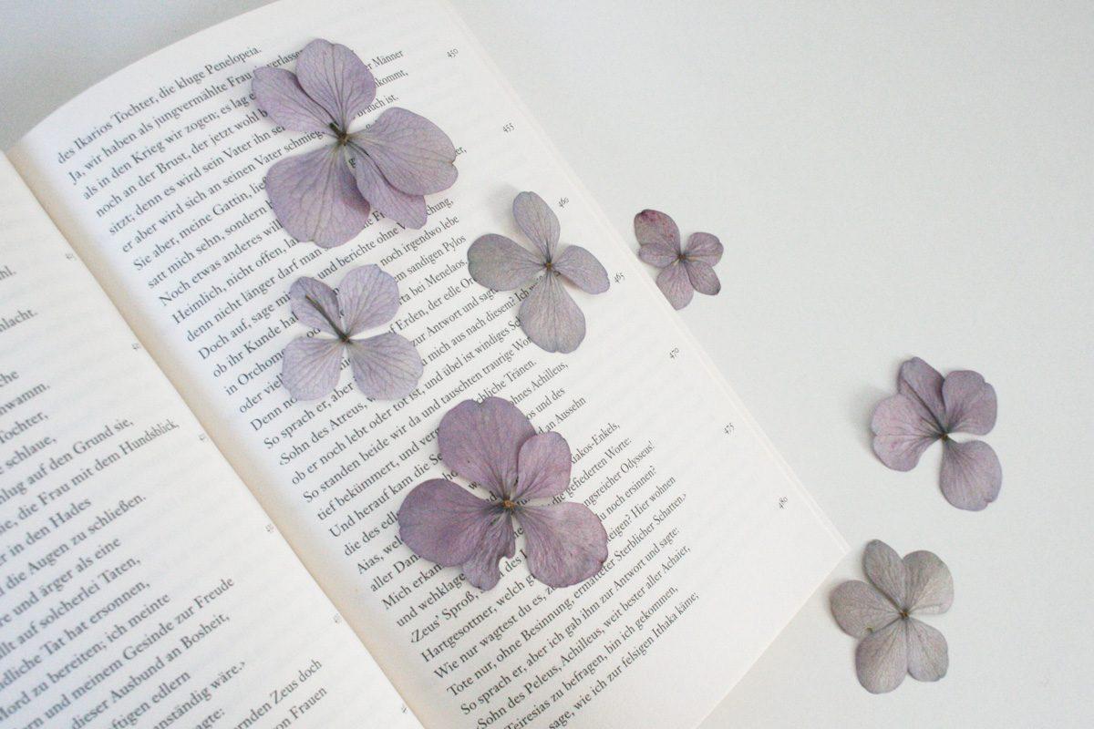 Blüten im dekorativen Glasrahmen arrangieren   ifolor